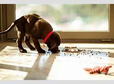 Puppy Feeding Fundamentals