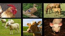 farm animal sounds an interactive game for kids youtube