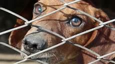 animali in gabbia chiuso uno dei pi 249 grandi mercati di carne di al suo
