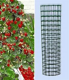 kletter erdbeere hummi 174 und dekor erdbeeren bei baldur