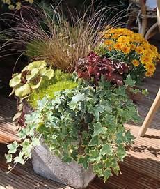herbstblumen balkon winterhart herbstbepflanzung f 252 r t 246 pfe und k 252 bel mein sch 246 ner garten