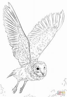 barn owl in flight coloring page free printable coloring
