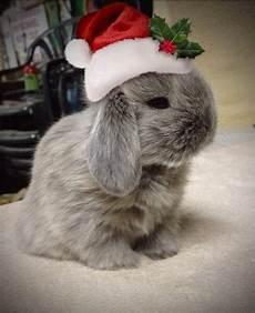 45 christmas bunny wallpaper wallpapersafari