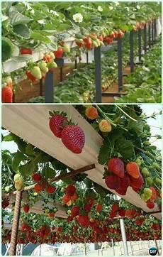 Gardening Strawberries by 10 Space Saving Strawberry Garden Gardening Planter Ideas