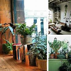 Home Decor Ideas Plants by Decorating Dilemma House Plants Decorator S Notebook