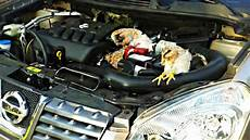 Marder Im Auto - marder am werk in meinem auto steckten tote h 252 hner 1414