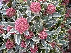 arbuste feuillage persistant c 244 t 233 jardin selection de feuillages quot d 233 co quot pour le
