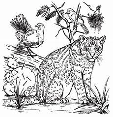 coloring book pages animals 16921 tpwd color the ocelot