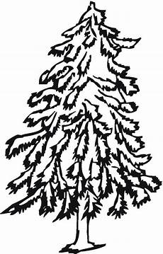 pino laso para colorear free trees coloring pages