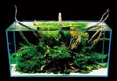 amano aquascape pin by vicki tunkel on aquascapes