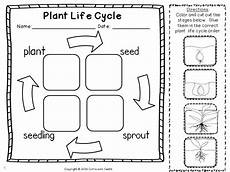 plant investigation unit all about plants cycle and needs plant cycle cycles