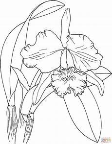 orquidea nacional para colorear dibujos de orquidea buscar con google orchid drawing flower drawing