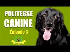 comment dresser un chien gratuit comment calmer chien quand il est excite
