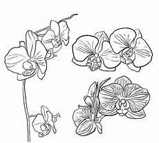 menakjubkan 11 gambar bunga raflesia vector gambar