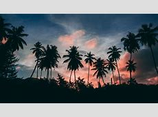 Palms Silhouettes 4K UltraHD Wallpaper   Wallpaper Studio