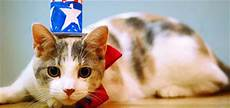 guess what it s always independence day for cats catster