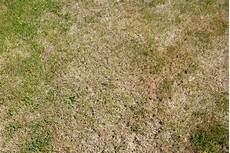 Rasen Ist Trocken 187 Was K 246 Nnen Sie Tun