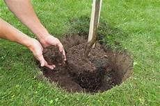 Obstbäume Pflanzen Wann - obstb 228 ume 187 dieser pflanzabstand ist einzuhalten