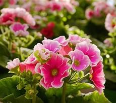 piante di fiori piante e fiori vendita piante e fiori garden a villorba