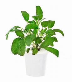 feng shui pflanzen reichtum 10 feng shui plants that will clear the air mydomaine