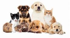 Pet Store Supplies Lima Oh Dot S Pet Center