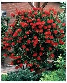 arbuste feuillage persistant arbres et arbustes 224 feuillage persistant achat vente