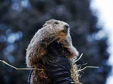 groundhog day results 2019 6 more weeks of winter spy