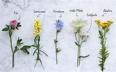 blumen englische namen my flowers