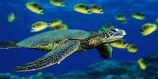 Nama Nama Hewan Laut Dan Gambarnya Nama Nama Hewan