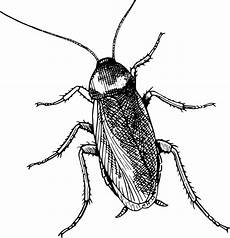 Fly Monochrome Photography Weevil Clipart Royalty Free