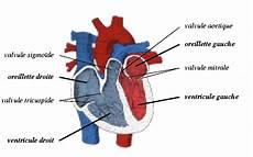 voile au poumon peut on r 233 animer un coeur avec l 233 nergie de la foudre