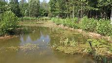 breathing life back into largish pond gone stagnant ponds at permies