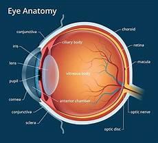 Mengenal Anatomi Mata Manusia Bagian Bagian Dan Fungsinya