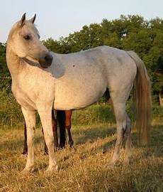 ponys zu verschenken kalinkalina pony zu verschenken