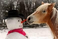 pferd weihnachten bilder und stockfotos istock