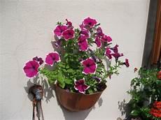 fiori di giugno soffi di creativit 224 fiori di giugno