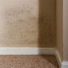 Mold On The Walls How To Kill It And Clean Up The Stains