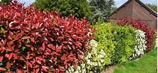 pflanzen für hecke hecken pflanzen diese heckenpflanzen f 246 rdern die