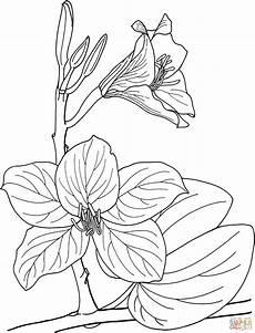 orquidea de venezuela para colorear orquideas imagenes para colorear