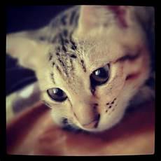 All In One Kucing Bisa Galau