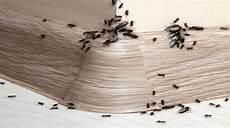 ameisen im bad was tun ameisen im haus bek 228 mpfen was kann gegen ameisen tun