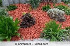 alternative zu rindenmulch und kies pinienrinde vorteile mulch pinien