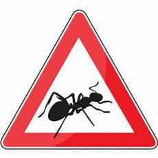 brennesseljauche gegen ameisen ameisen formicidae arten lebensweise und nutzen