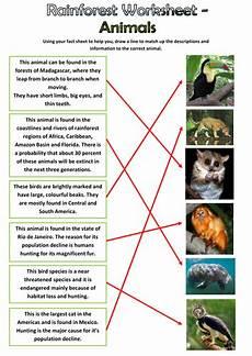 rainforest animals worksheets elementary 13860 rainforest animals pack by edbentham teaching resources tes