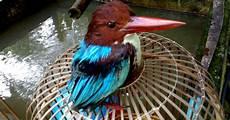 Binatang Berbisa Gambar Gambar Burung Unggas Hutan Dan