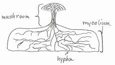 diagram of fungus what makes a fungus a fungus jake s nature