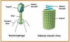 Biologi Gonzaga Virus