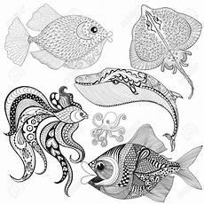 Ausmalbilder Fische Hecht Ausmalbilder Fische Hecht Best Of Fr Erwachsene Fisch