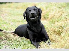 What Happens When A Dog Reverse Sneezes?   AKC Vet's Corner