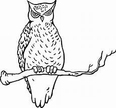 Gambar Wallpaper Burung Hantu Kartun Gudang Wallpaper